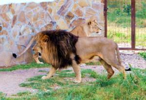 "Lion Park  ""Taigan"""