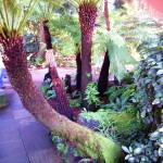 Kew garden (16)