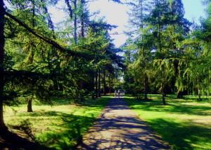 Kew garden (3)