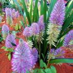 Kew garden (32)