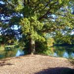 Kew garden (35)