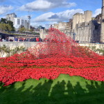 Red Poppies at the Tower of London